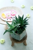 Harmonisches Sommerglück mit der Aloe