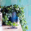 Efeu ist Zimmerpflanze des Monats April