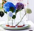 Kugelrunder Blütenspaß: kein Sommer ohne Hortensien