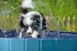Hitze und Hund: Was Bello, Bella und Buddy an heißen Tagen guttut