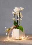 Liebevolles Mitbringsel -  Dekorative Pflanzgefäße, die individuell bestückt werden können