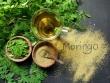 Moringa Oleifera - der Wunderbaum
