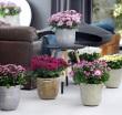Mit Zimmerpflanzen das Zuhause aufblühen lassen
