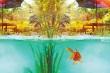 Ungetrübte Freude am Teich
