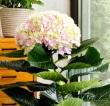 Blühende Zimmerpflanzen als Einstimmung auf den Frühling